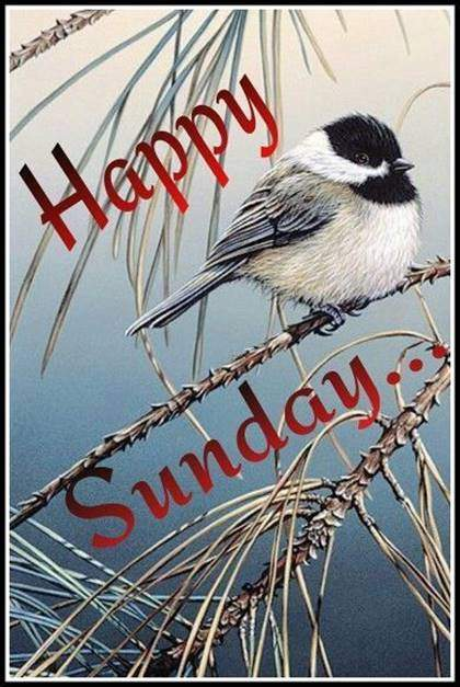 good morning wishes with images for sunday