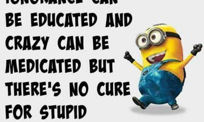 42 Best Funny Jokes Minions Quotes With Images 37