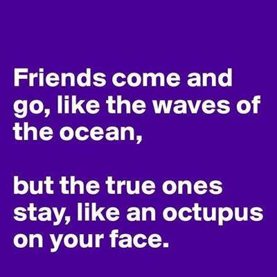 60 Best Crazy Funny Friendship Quotes Images 1