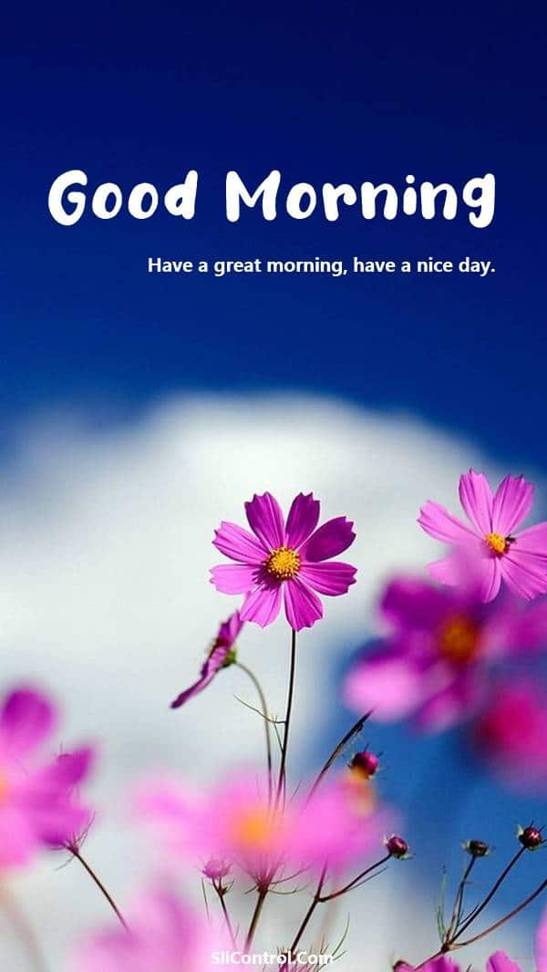 80 Romantic Good Morning Messages for Her | good morning dear love, good morning words, good morning greetings for her