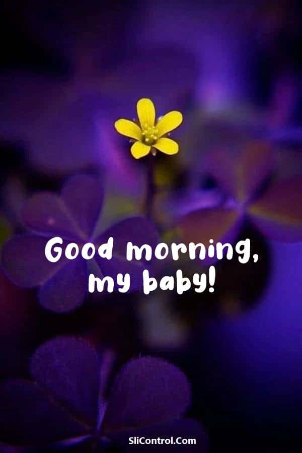80 Romantic Good Morning Messages for Her | morning love, good morning message to my love, good morning love message