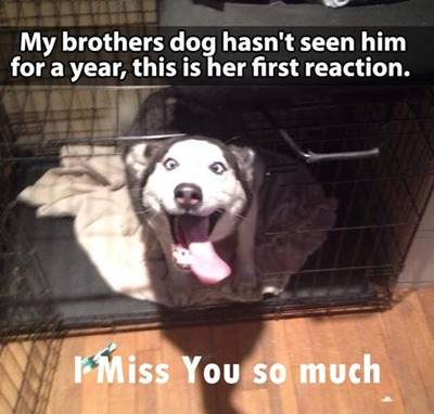 """45 Best I Miss You Memes - Funny Memes for Love """"My brothers dog hasn't seen him for a year, this is her first reaction. I miss you so much."""""""
