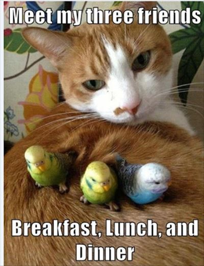 """45 Best I Miss You Memes - Funny Memes for Love """"Meet my three friends. Breakfast, lunch, and Dinner."""""""