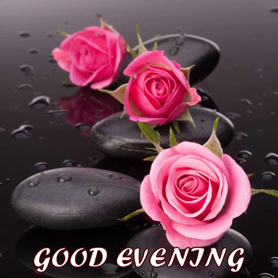 enjoy your evening quotes