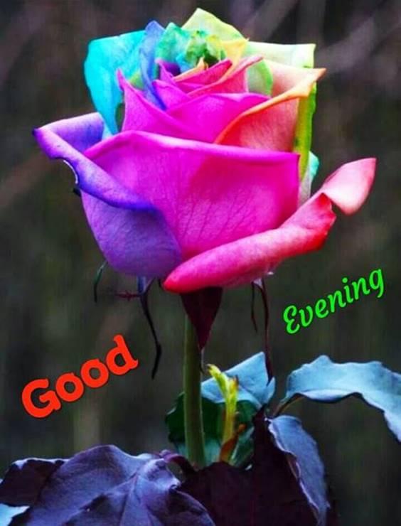 good evening card