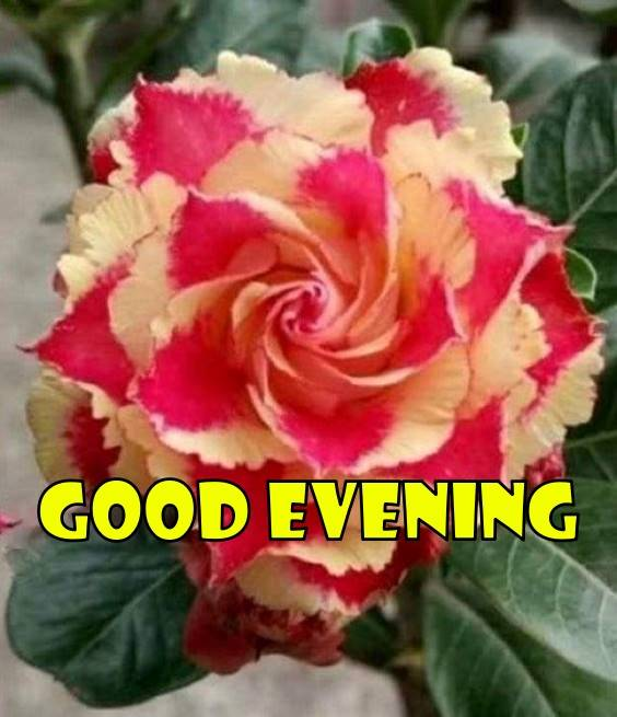 good evening thoughts